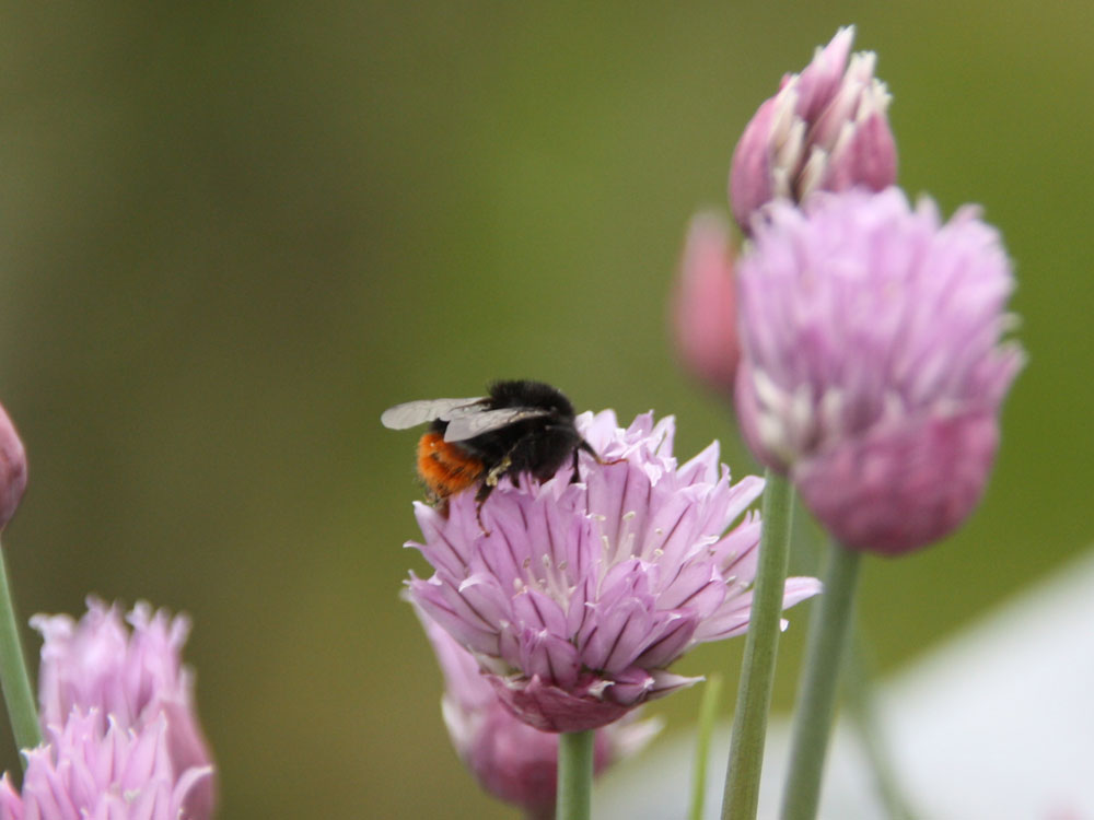 Materiallager Für Insekten