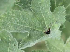 Winzige Käfer