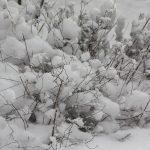 Spiere bei Schnee