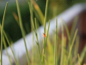 Mini-Spinne im Spinnennetz