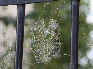 Spinnweben mit Tautropfen
